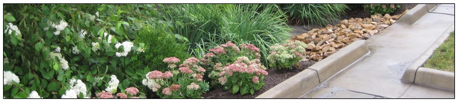 Photo of Bioretention