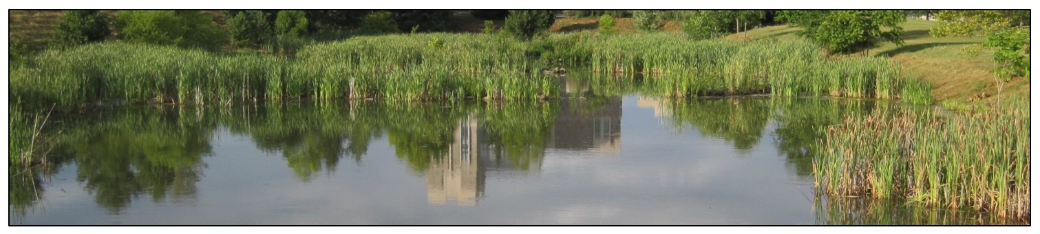 Photo of constructed wetlands