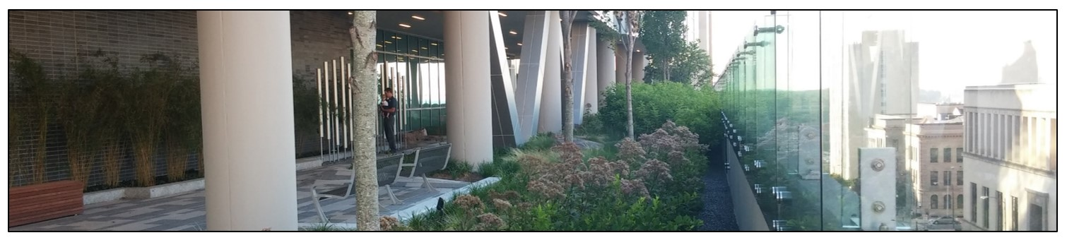 Photo of Vegetated Roof
